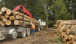 Hiring a Logger in Minnesota for Deer Woods